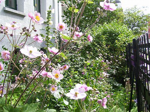 blog-2009-07-26b.jpg