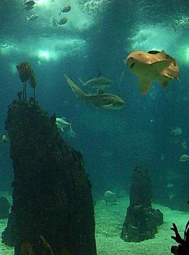 Aquarium-Hai