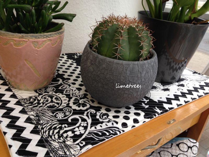 kaktus auf schwarz-weiß