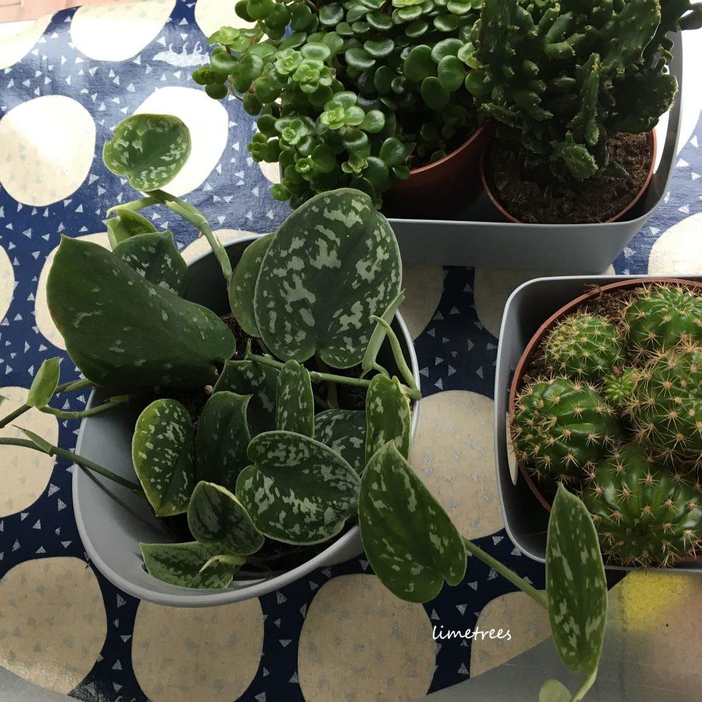kaktus und co