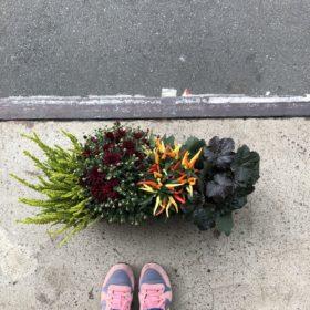 werbung für die einfachste balkonbepflanzung der welt