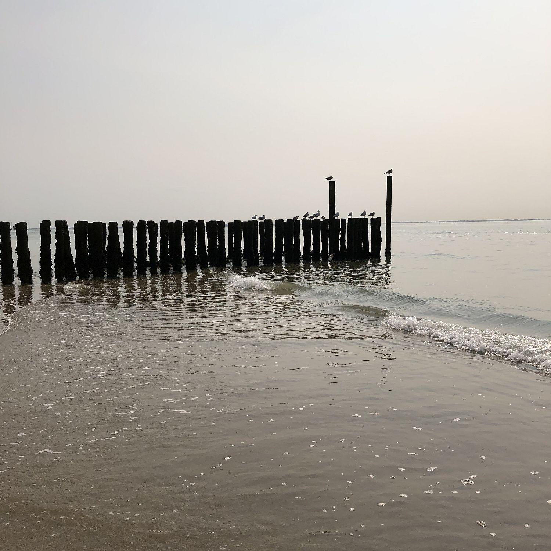 Möven am Strand von Zoutelande