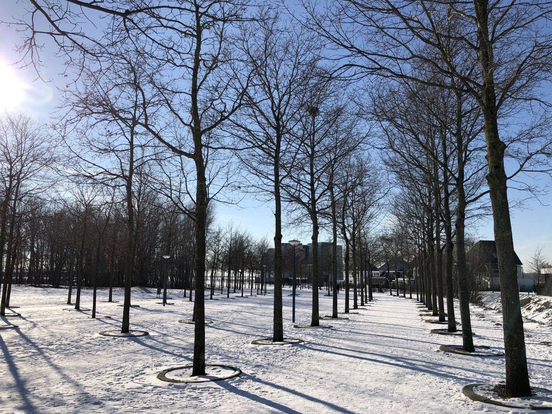 Spaziergang im Schnee