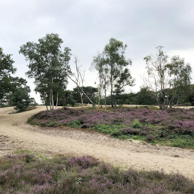 Urlaub in den Niederlanden - Heide Brabantse Wal