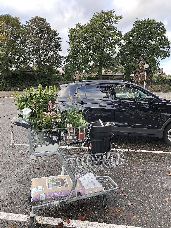 Gartenpflanzen kaufen