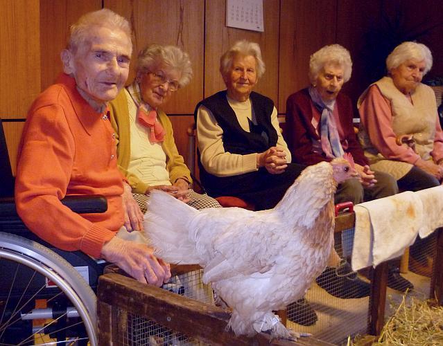 Streichelzoo im Seniorenzentrum Ihmeufer