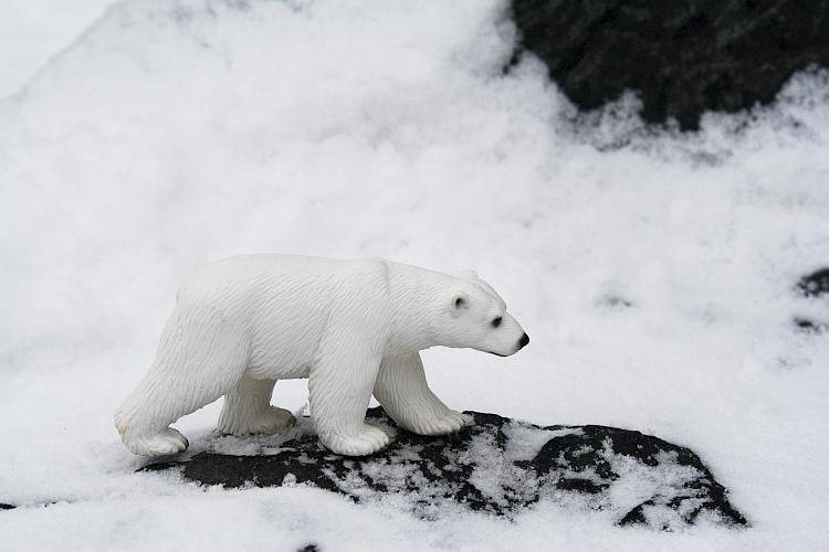 Besuch aus der Arktis  (Foto: Torsten Bachmann)