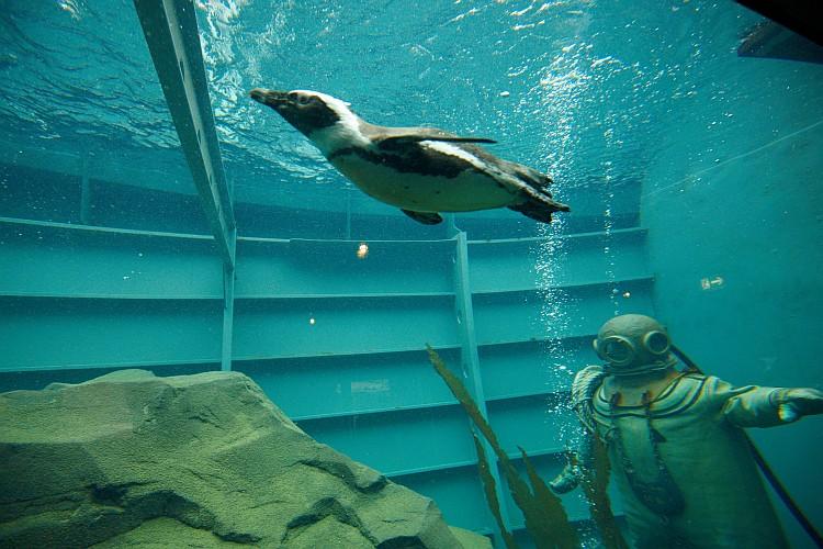 Unterwasserwelt im Zoo Hannover