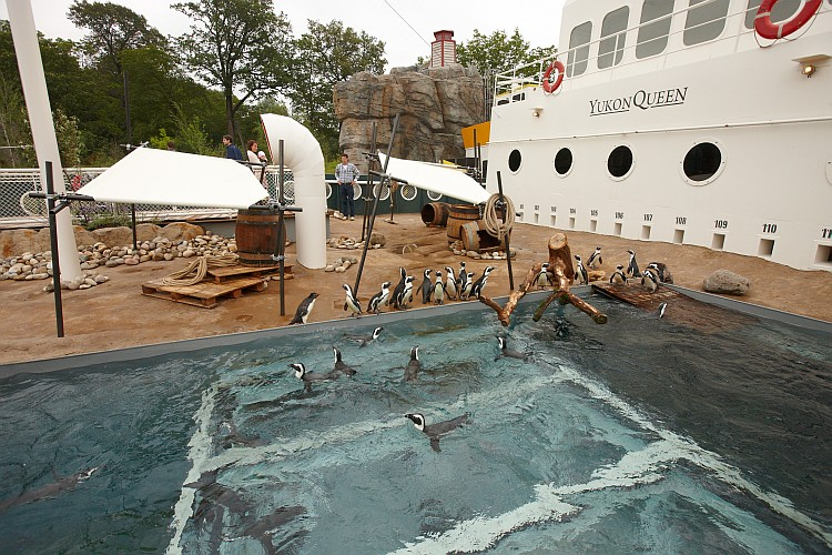 Pinguine in der Yukon Queen