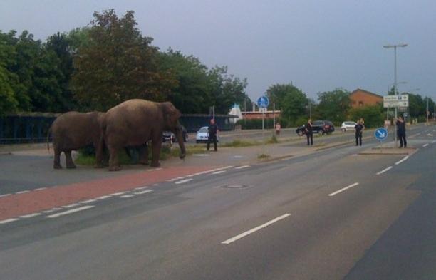 Elefantenjagd
