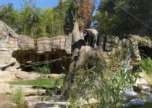 Schimpanse Max erobert die neue Außenanlage