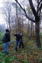Baumprüfung (Foto 1)