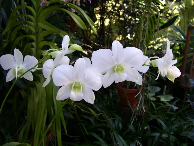 Orchideenhaus im Berggarten