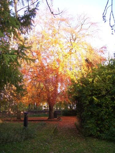 Baumrundgang im Herbst