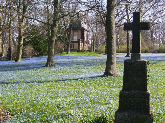Scillablüte auf dem Bergfriedhof
