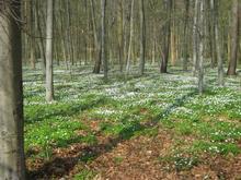 Eilenriede im Frühjahr