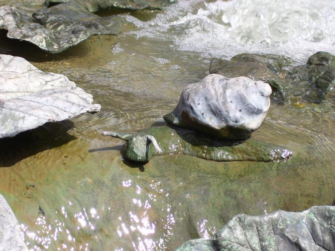 Schnecke auf dem Blätterbrunnen