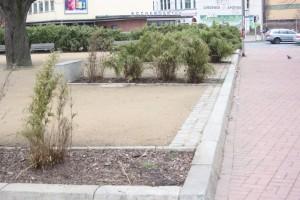 Grünflächenpflege ist wichtig - Sonst sieht es bald so aus!