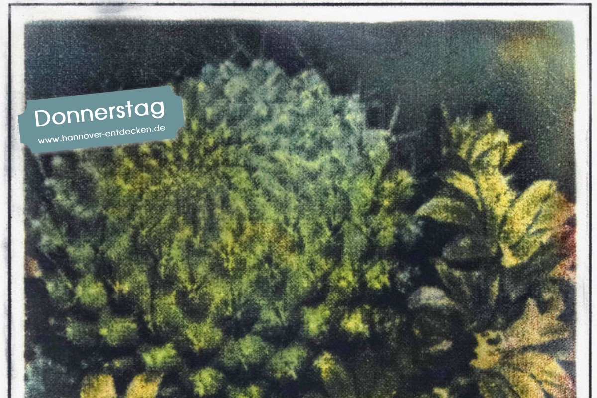 Kaktus - Christoph Bartolosch