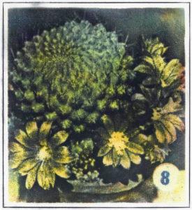 Kaktus von Christoph Bartolosch