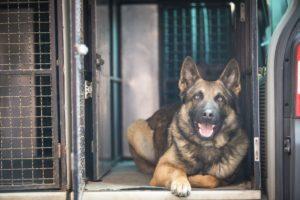 Polizeihund Cooper