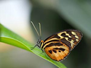 Schmetterling im Berggarten