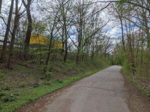 Bäume am Südschnellweg sollen dem Verkehr weichen
